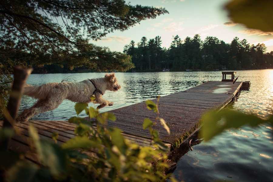 5 Things to Consider When Buying a Cabin near Pequot Lakes